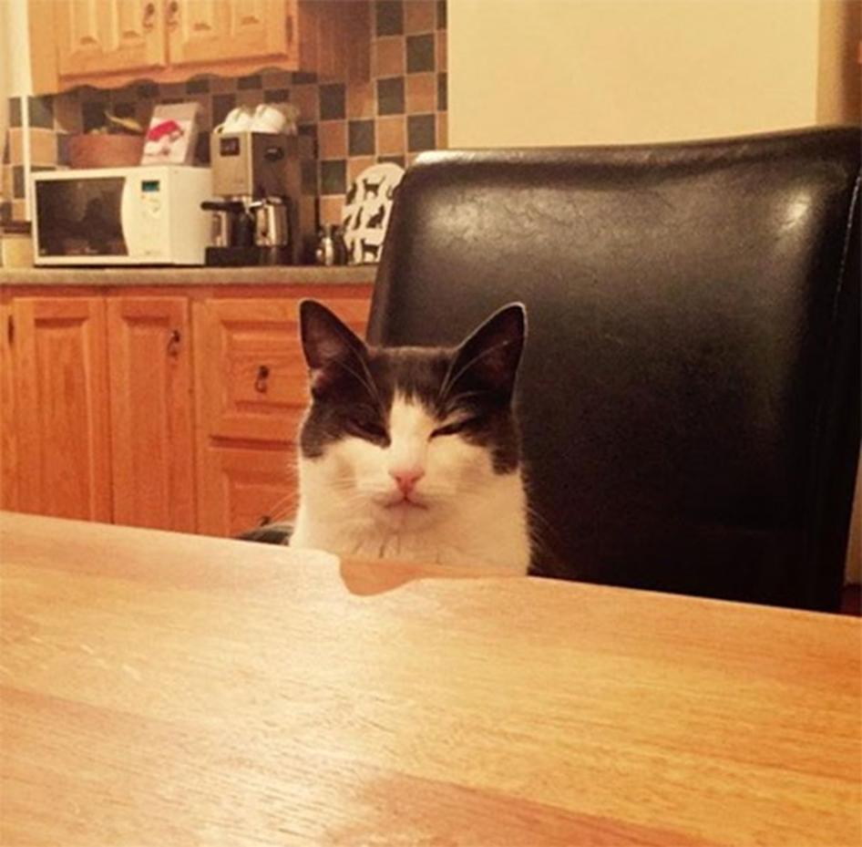 8. Sin querertiréla leche de su plato, y no tenía más para reponerla. Me miró así toda la noche.