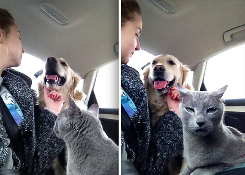 4. Este gato no aprueba el amor humano/perro. Sólo humano/gato.