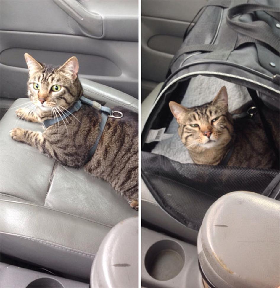 La diferencia en el viaje de ida al veterinario, y de vuelta